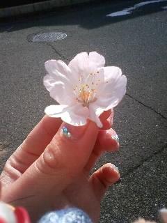桜ぁー!!